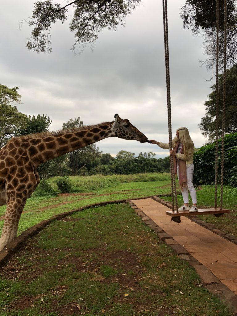 Ines Juranovic Giraffes